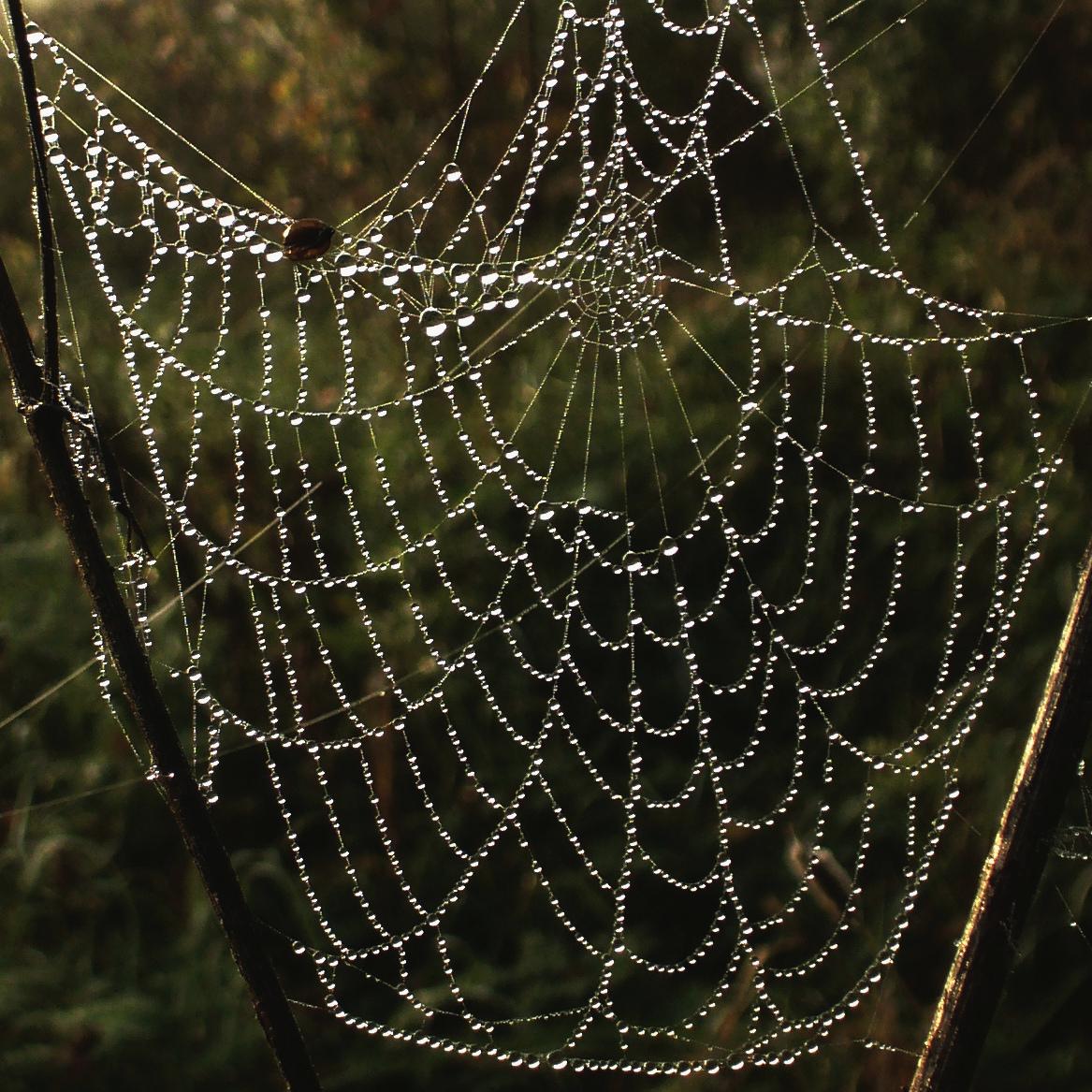 Spider-webs-belarus
