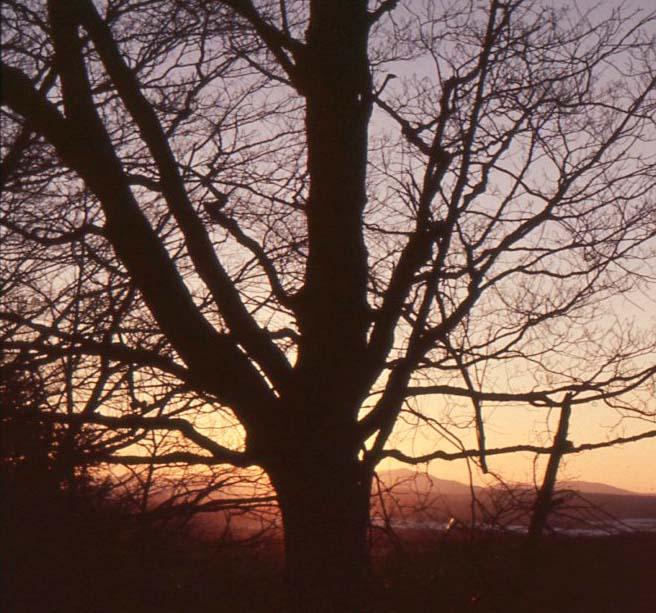 sunsetonpond